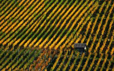 Fotografo Drone Novara
